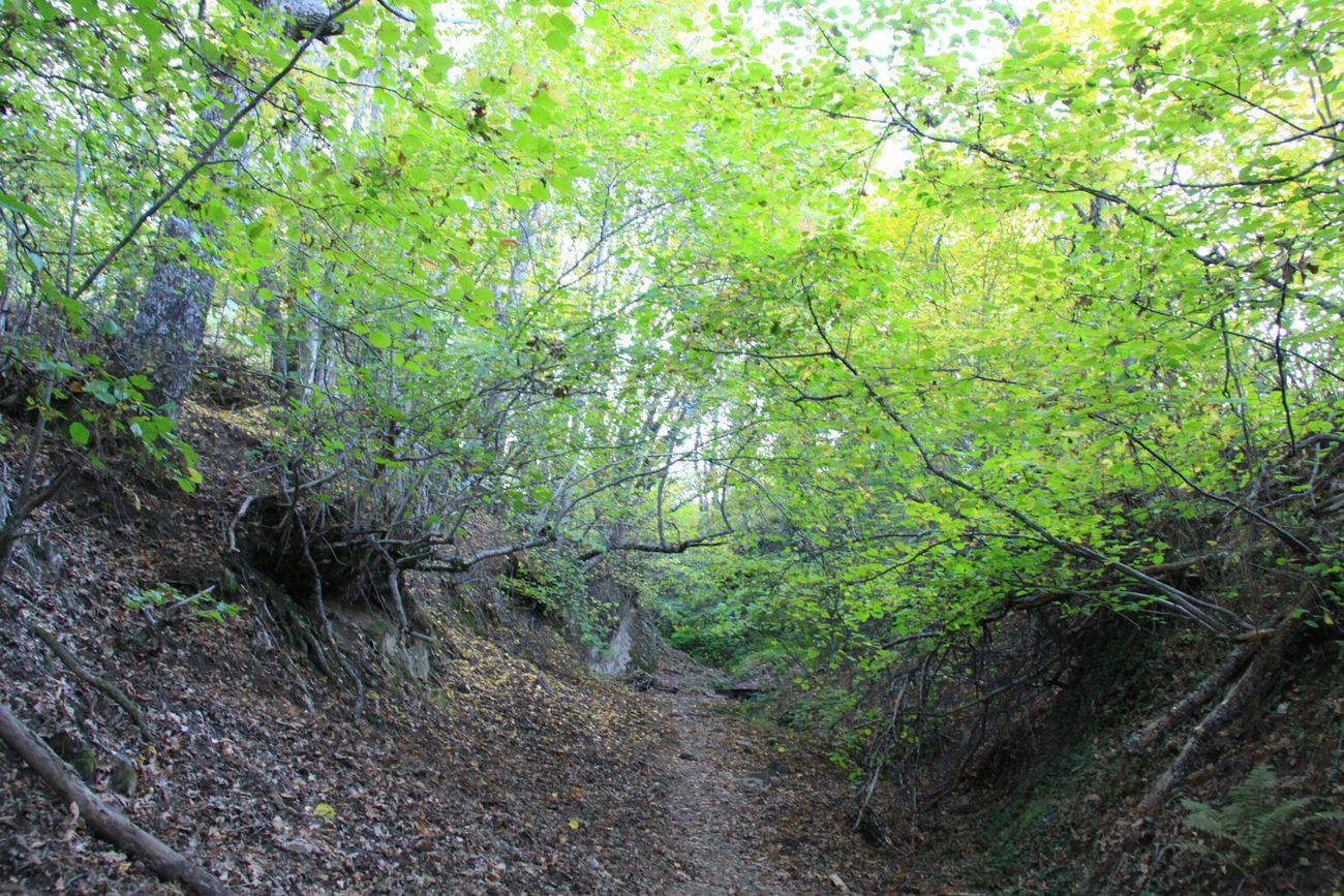 Campo Flora La Hiruela Pueblos De España Bosque