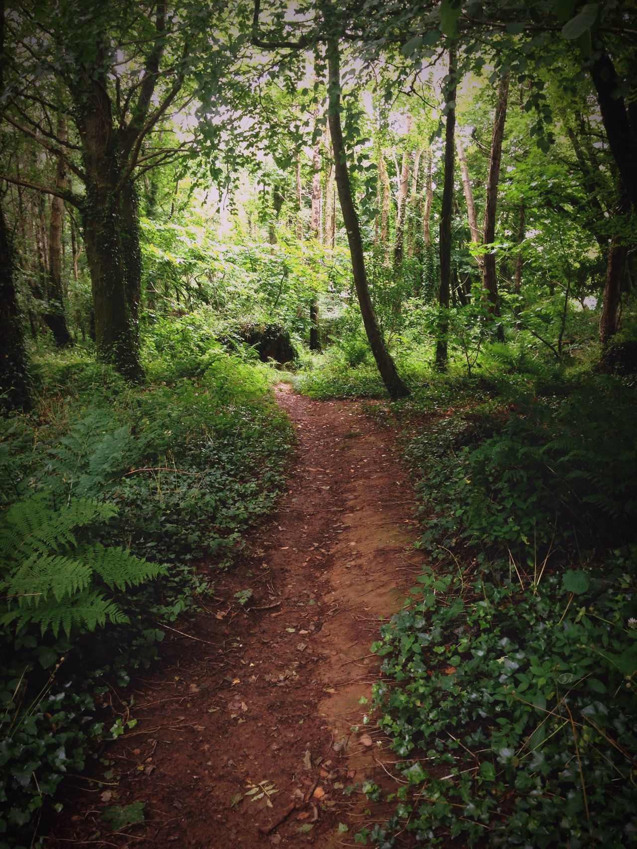 Forest Walk Path Paths Nature Tree Trees My Way Walking Geen