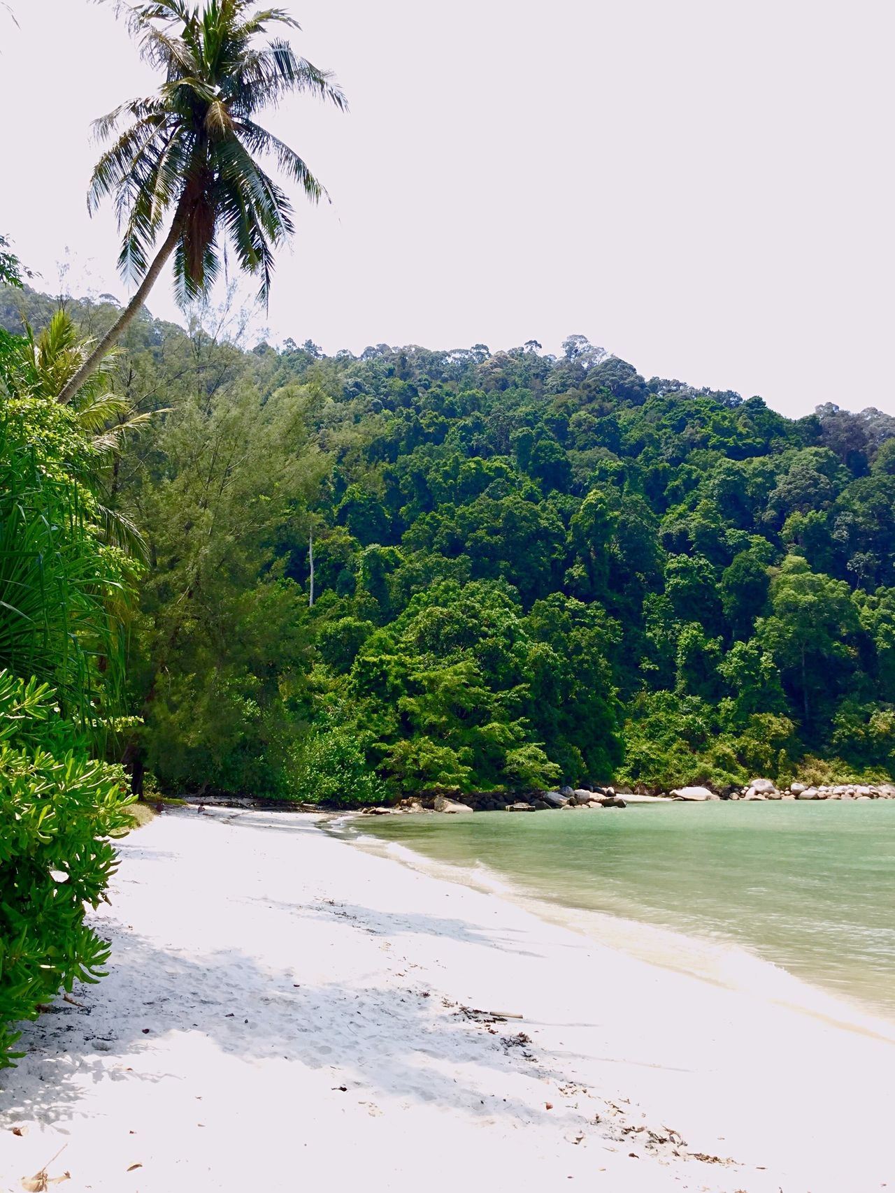 Jungle Beach Islandlife Penang My Unique Style Malaysia Beach Monkey Beach White Sand Jungle Greenery Nature The Great Outdoors Paradise