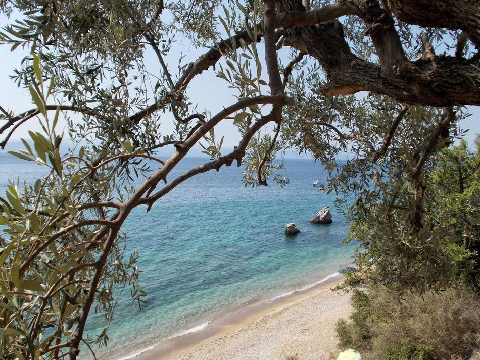 Beach Beauty In Nature Branch Crystal Clear Waters Day Greece GREECE ♥♥ Horizon Over Water Nature Nature Nature Photography Nature_collection No People Outdoors Pelion,Greece Scenics Sea Sky Tranquil Scene Tranquility Tree Water