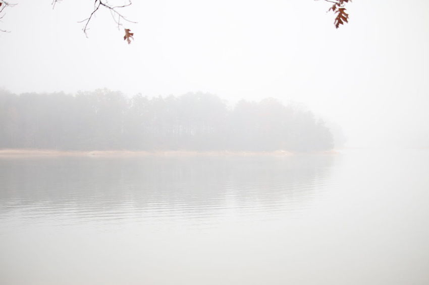 Nature Tree Sky Nature Outdoors Fog Horizon Over Water Scenics Tranquility Landscape Beauty In Nature Water