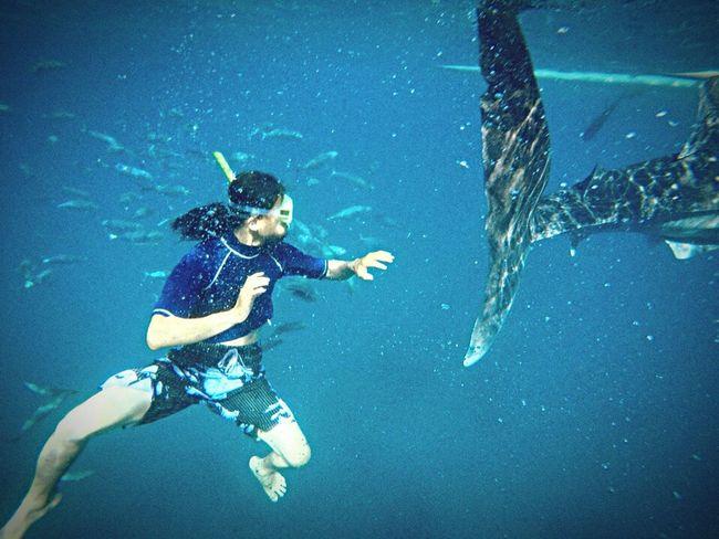 Original Experiences Eyeem Philippines Oceanphotography Whales Underwater