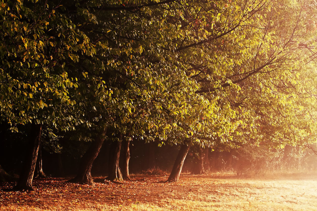 tree, beauty in nature, nature, growth, tranquility, branch, tranquil scene, scenics, outdoors, no people, tree trunk, day, landscape