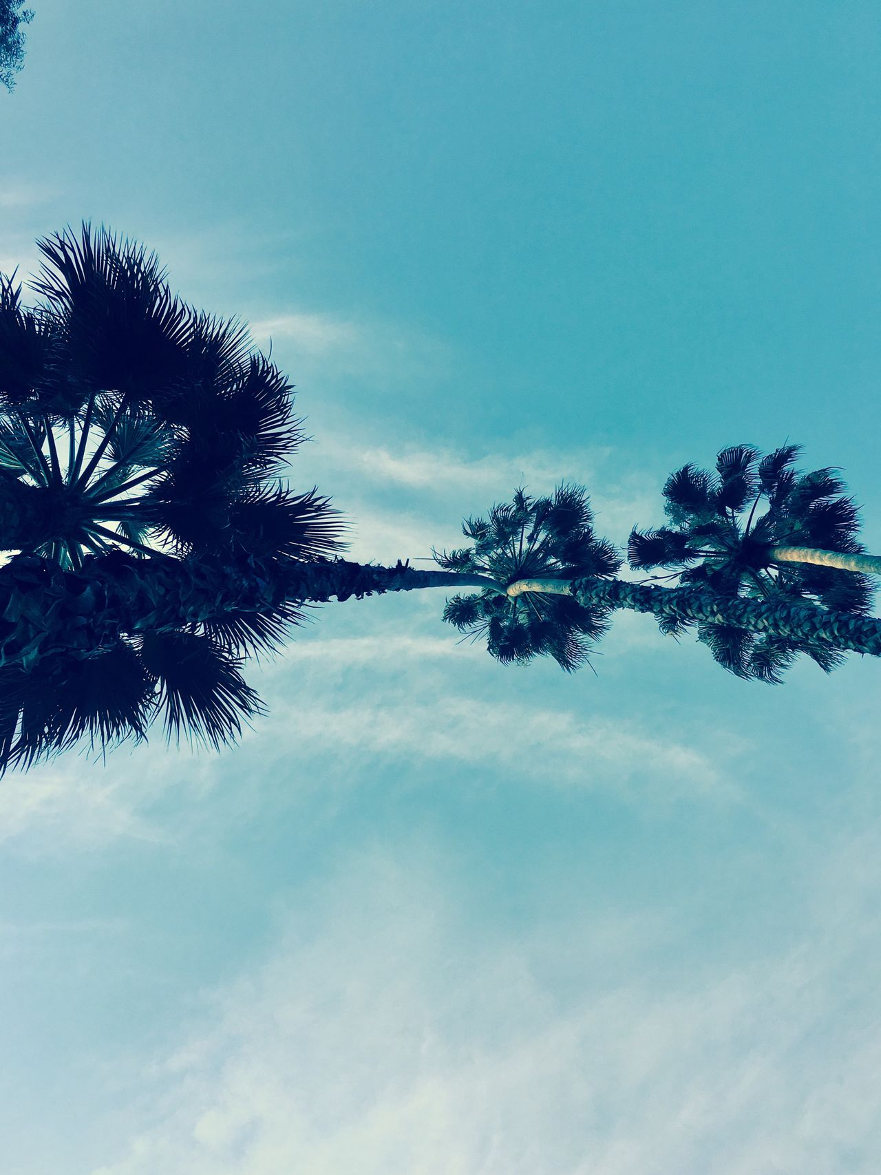 Palms Blue Sky Lines Nature California Meet In The Middle Palm Trees Outdoors