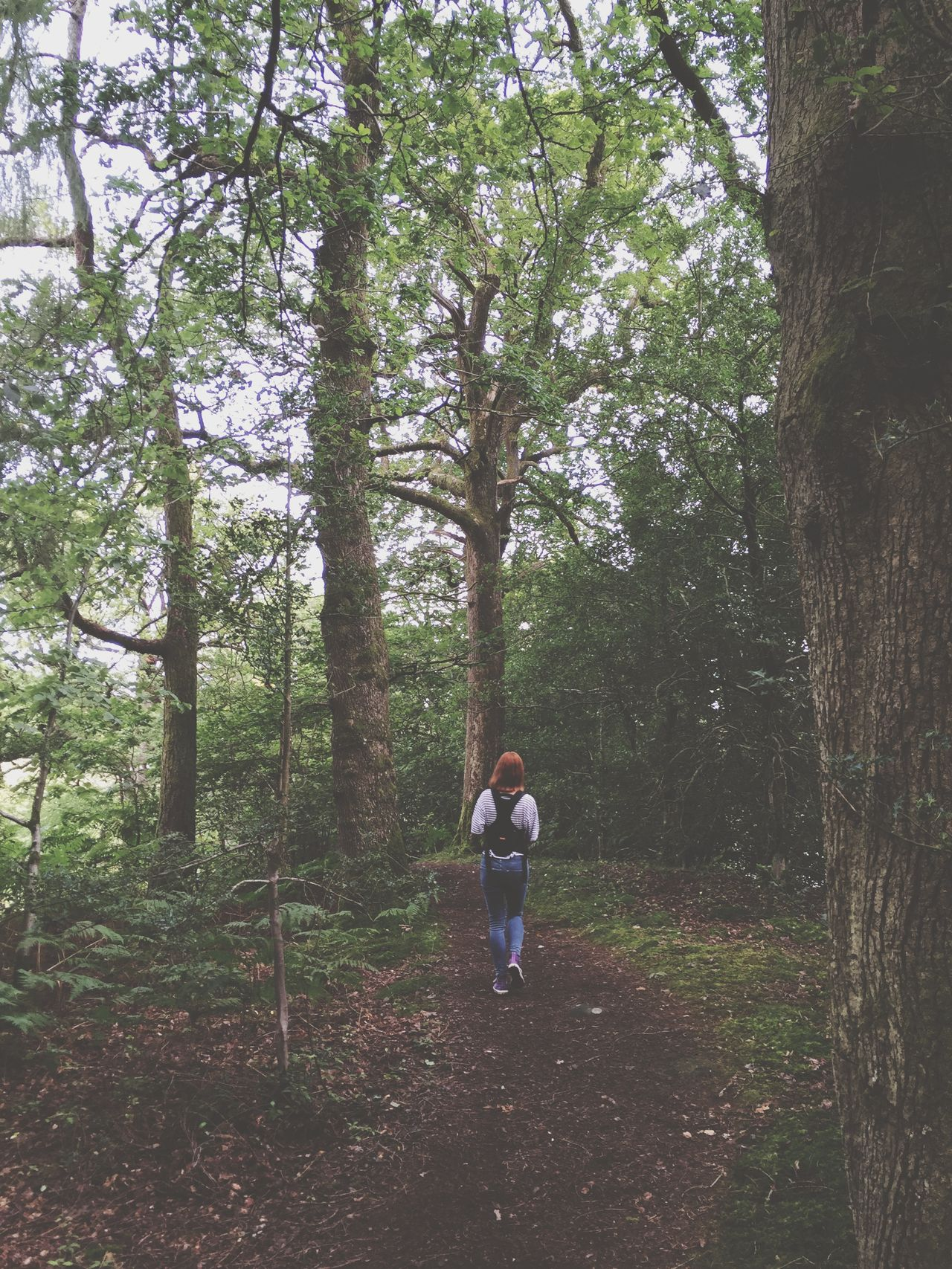 Walking Around Walkonthewildside Nature Nature_collection Mother & Daughter Lakedistrict Forest Woods