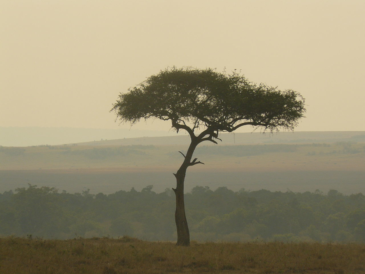 Maasai Mara Tree Dusk Colours Dusk Sky Landscape Landscape_Collection Scenic Landscape Scenics