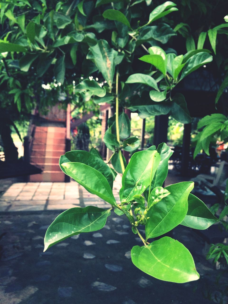 leaf, green color, growth, plant, outdoors, nature, day, no people, close-up, freshness, beauty in nature, tree