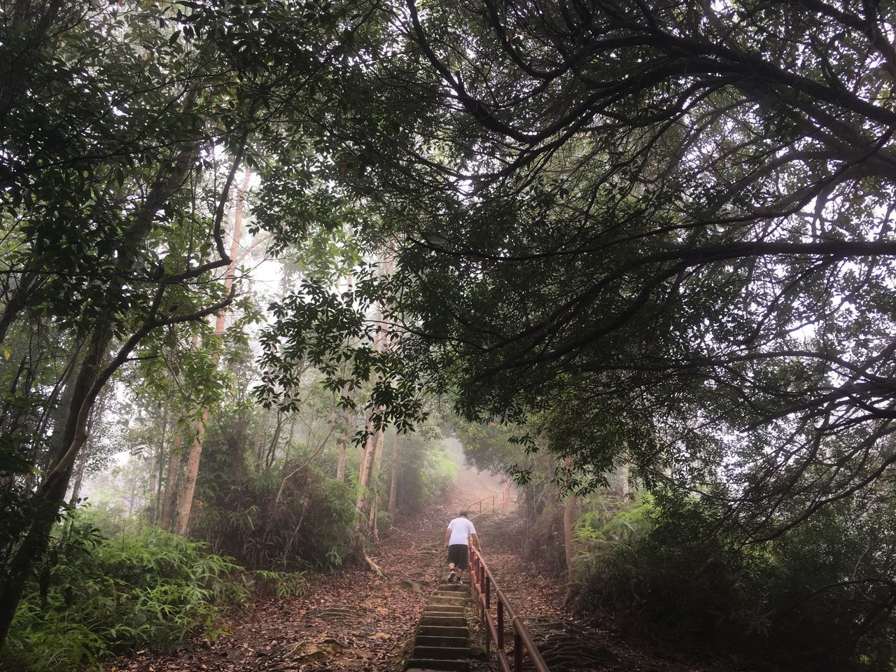 Tree Nature Forest Lifestyles One Person Walking The Way Forward Outdoors Misty Morning Sungai Lembing Malaysia Pahang, Malaysia Hiking Full Length Beauty In Nature Real People Leisure Activity Growth Tranquility Cycling Men Day People Adults Only Adult