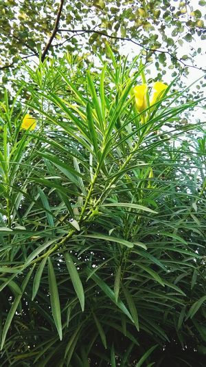 Flower Green Color Growth Nature Plant