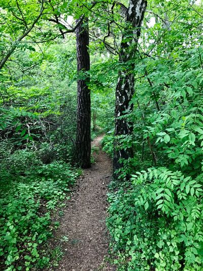 Trolls live here. Green Color Nature Tree Growth Forest Beauty In Nature Tree Trunk No People Outdoors Tranquility