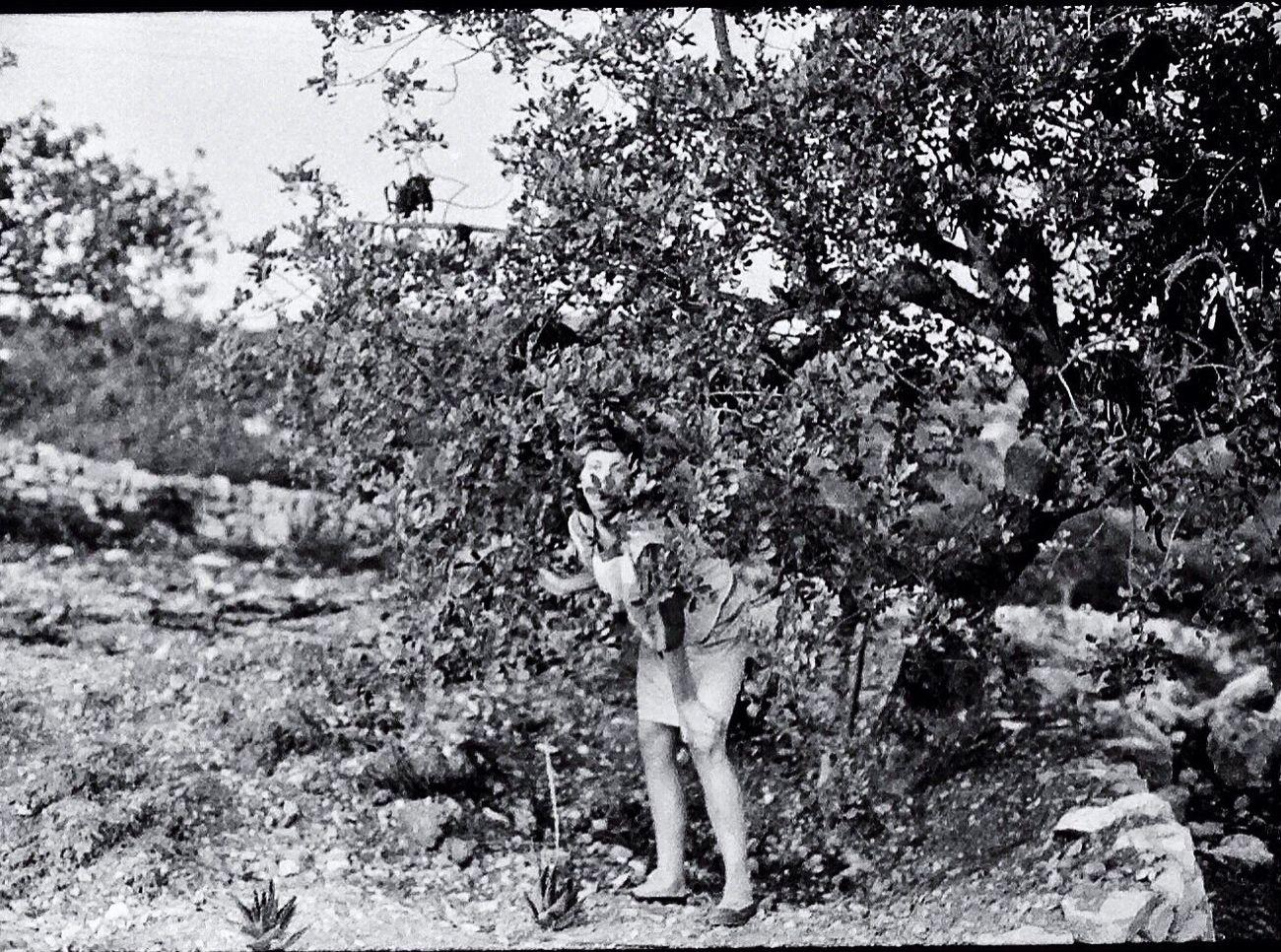 Tree Nature Blk N Wht Portugal Nikon FE Koduckgirl