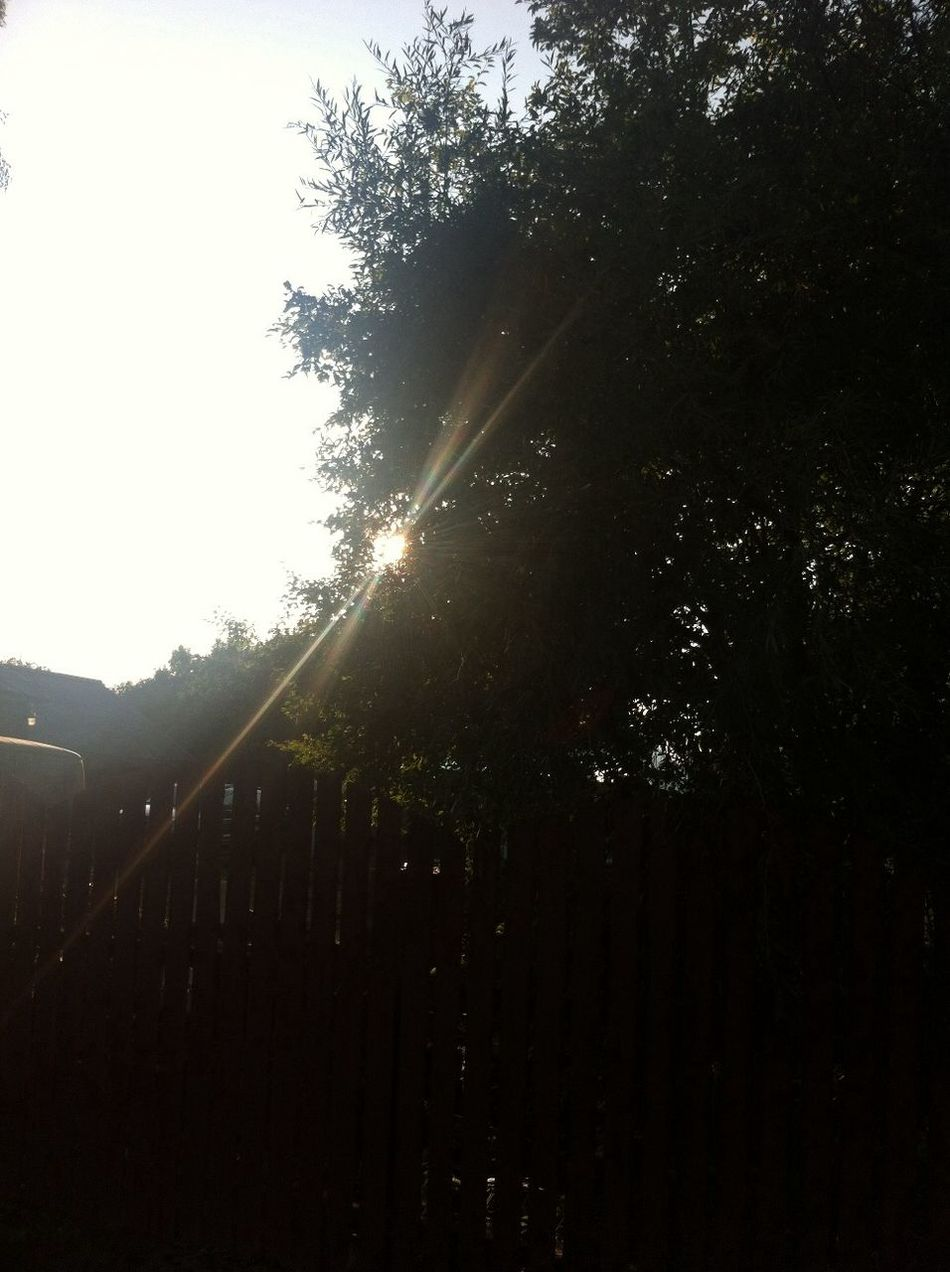 Sun Across Tree