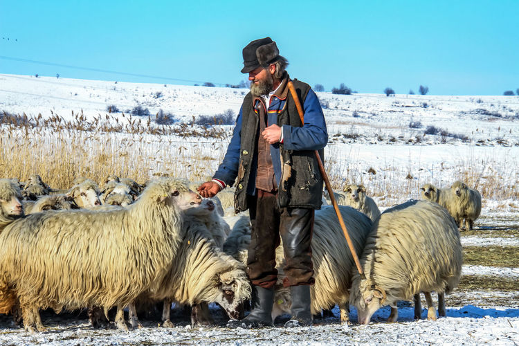 Shepherd Of The Sheep Adult Agriculture Animal Themes Beauty In Nature Casual Clothing Cold Temperature Day Domestic Animals Farmer Front View Full Length Leisure Activity Lifestyles Livestock Looking At Camera Mammal Nature One Animal One Person Outdoors Real People Sky Standing Warm Clothing