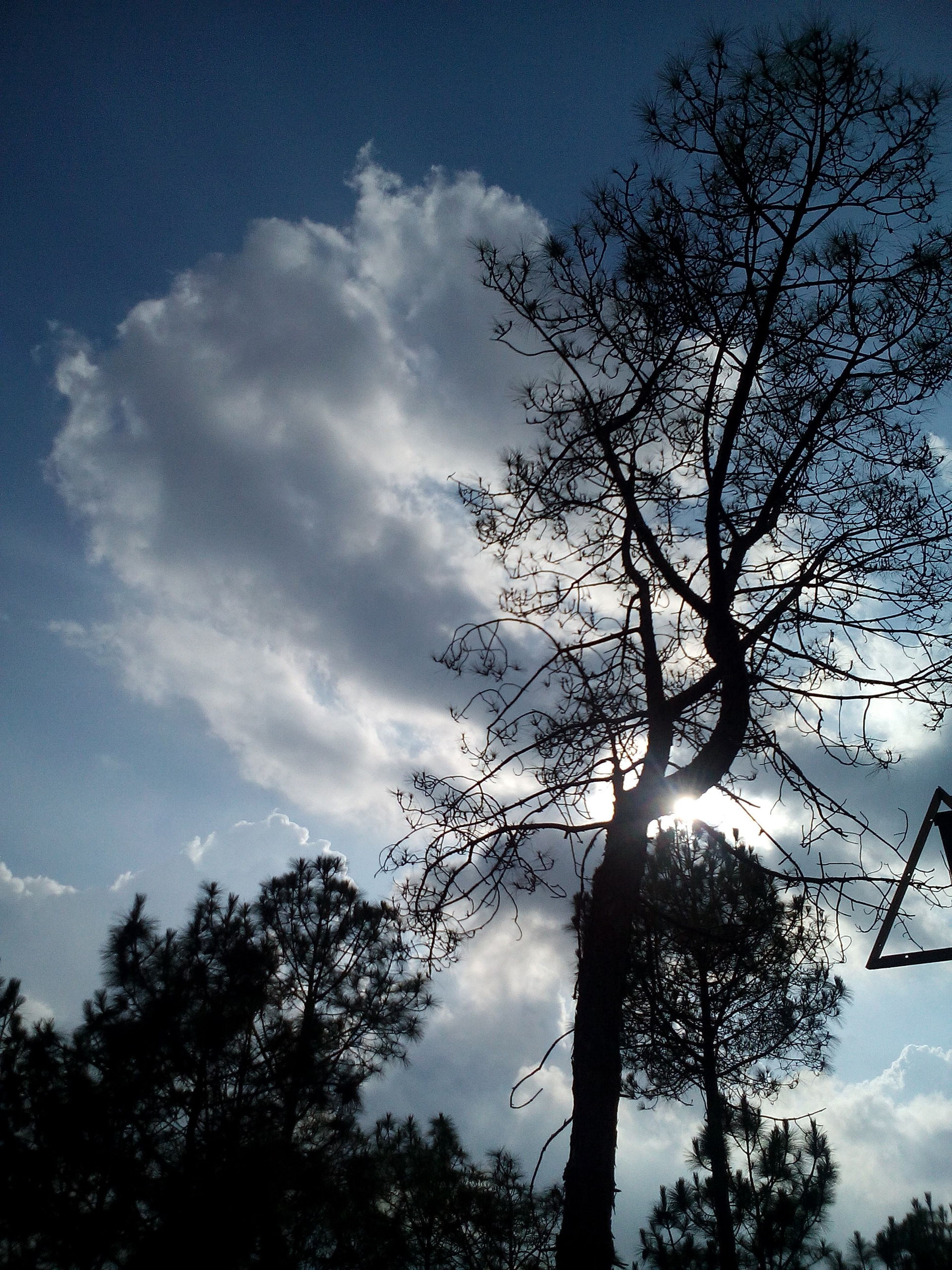 tree, sky, low angle view, nature, cloud - sky, silhouette, beauty in nature, tranquility, no people, sunset, treetop, outdoors, branch, day, star - space