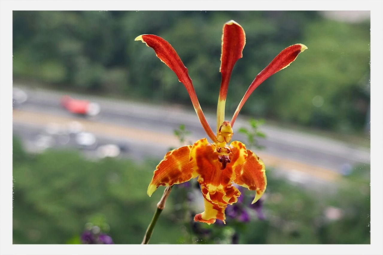 Close-Up Of Orange Orchid Blooming Outdoors