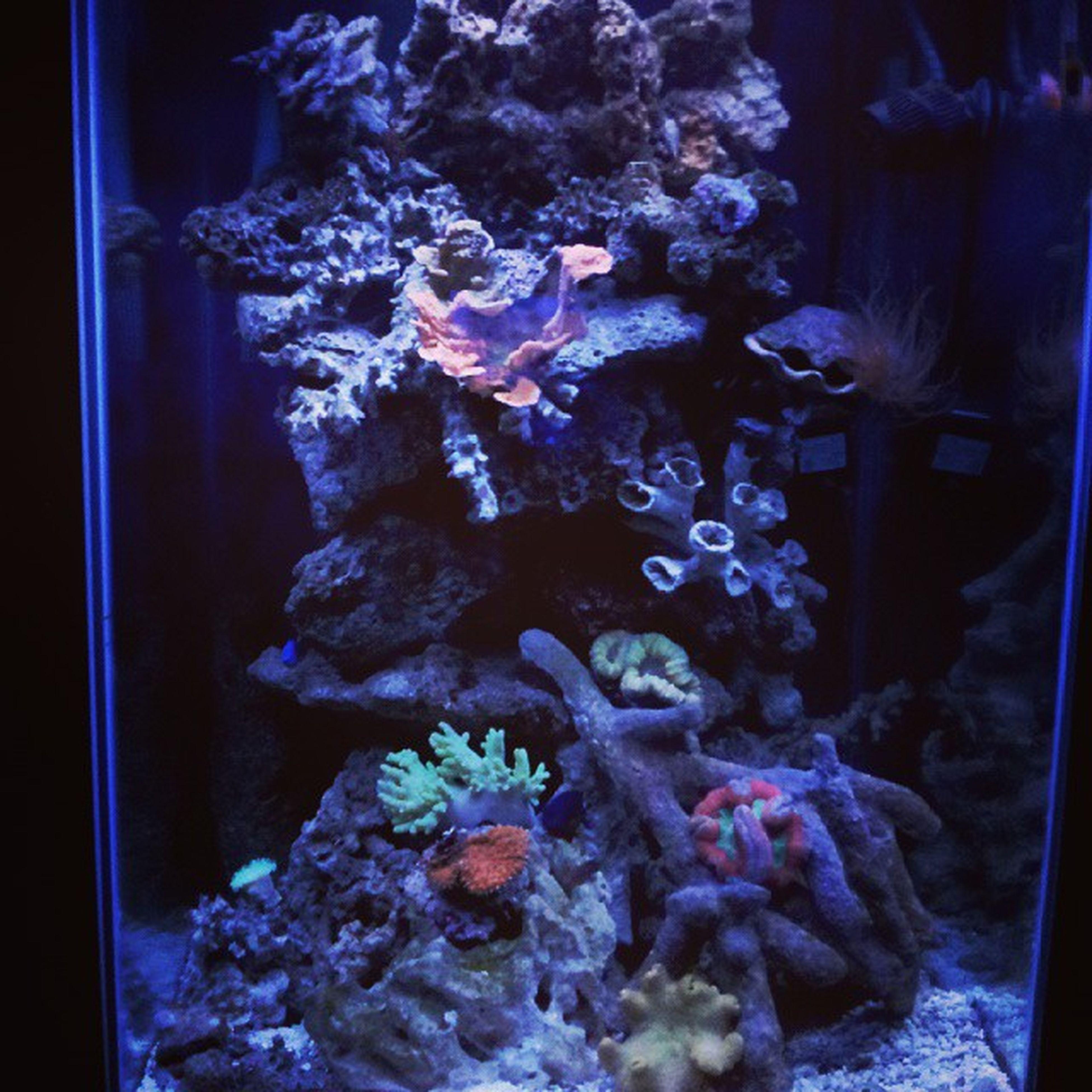 Reeftank Reef4reef Reef Allmymoneygoestocoral Reefers4reefers Coral Coraltank Coralreef Coralmushroom Igcoral Igreef Igcoral Igcoral Gayowner Gayowned Gaylifestyle Gaysofinsta Gay