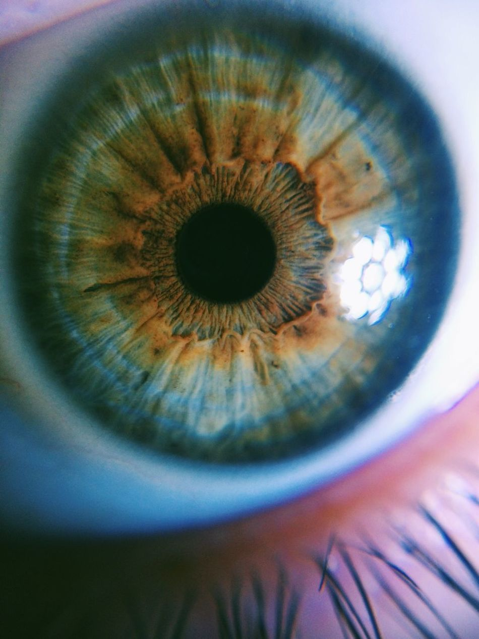 Beautiful stock photos of eyes, Attractive, Detail, Extreme Close Up, Front View