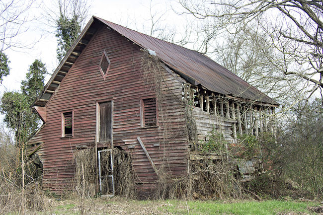 Abandoned Architecture Bad Condition Barn Building Exterior Built Structure Clear Sky Damaged Day Deterioration Discarded Field Grass Grassy House No People Obsolete Old Outdoors Ruined Run-down Rural Scene Sky Tree Weathered