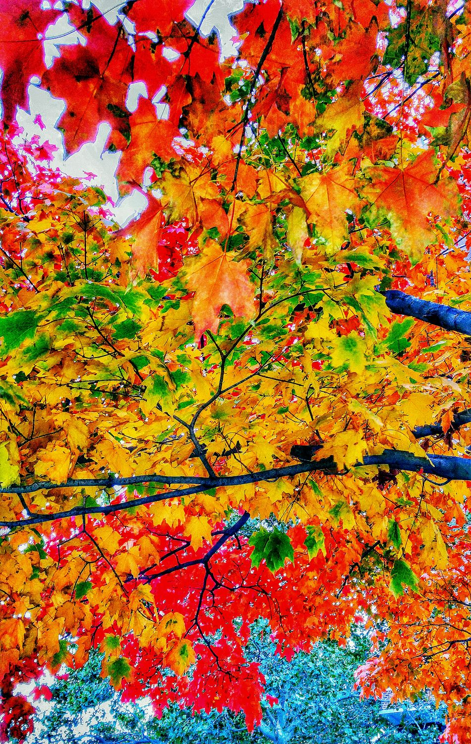 Fall Colors Tree Branches Autumn Leaves In The City Multi Colored Orange Color Red Autumn Abstract Yellow Change Backgrounds Leaf Growth No People Nature Tree Close-up Beauty In Nature Day