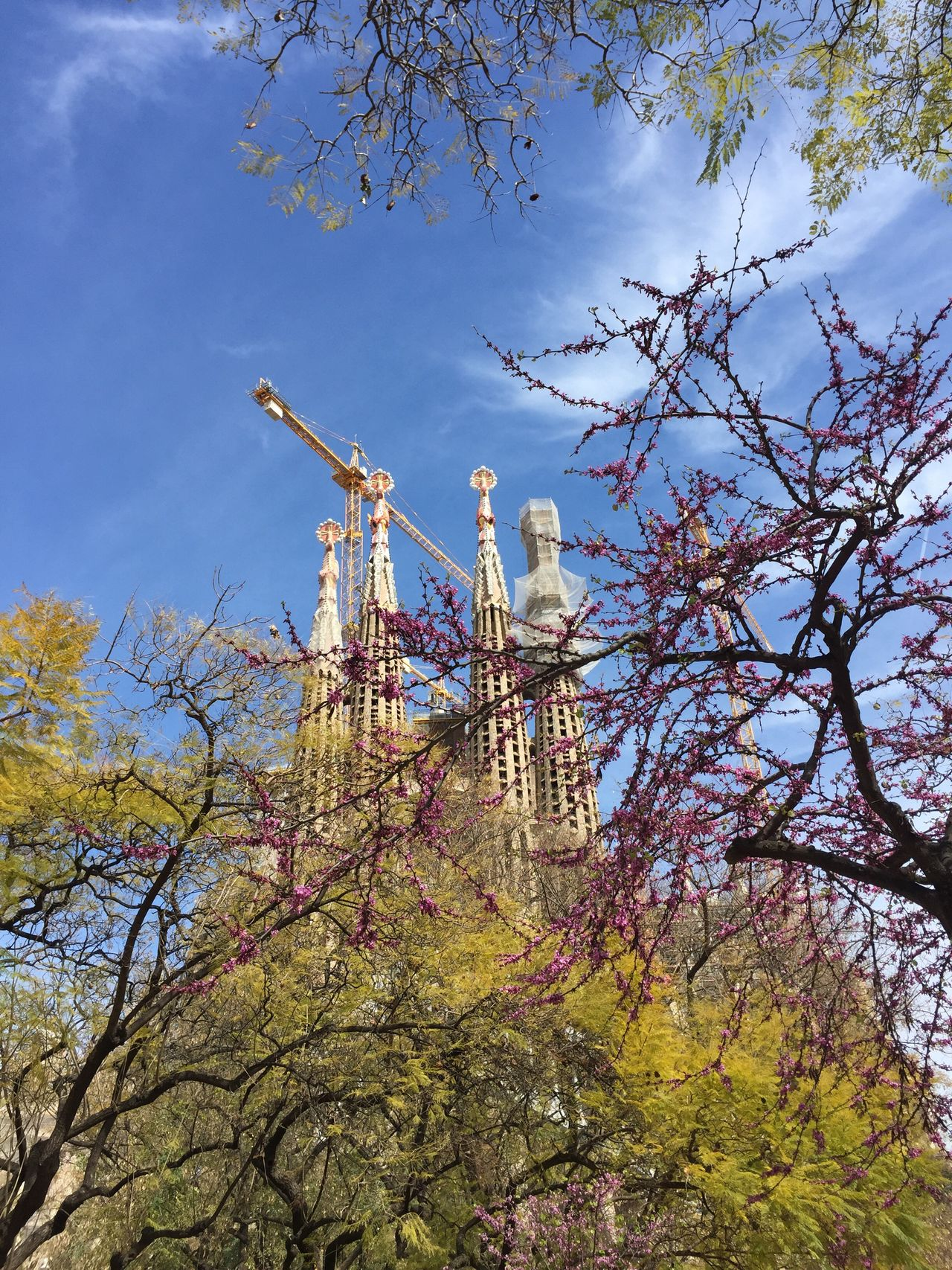 Urban Spring Fever La Sagrada Famila Flowering Tree Budding Tree Church Springtime IPhoneography