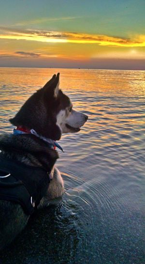 The Great Outdoors - 2017 EyeEm Awards Admiring the sunset Dog Pets One Animal Domestic Animals Beach Mammal Water Sunset Outdoors Nature Sky No People Vermilion Lakes Sunrise