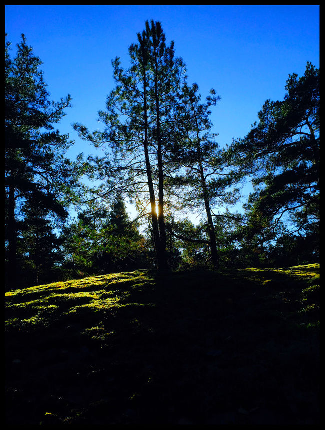 Tree Light And Shadow Light Nature Malephotographerofthemonth Nature Outdoors Sky Silhouette Mystery