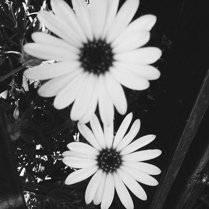 Love ???Flor Flower Tumblr Intentotumblr nature plantas fresh primavera chilegram instachile