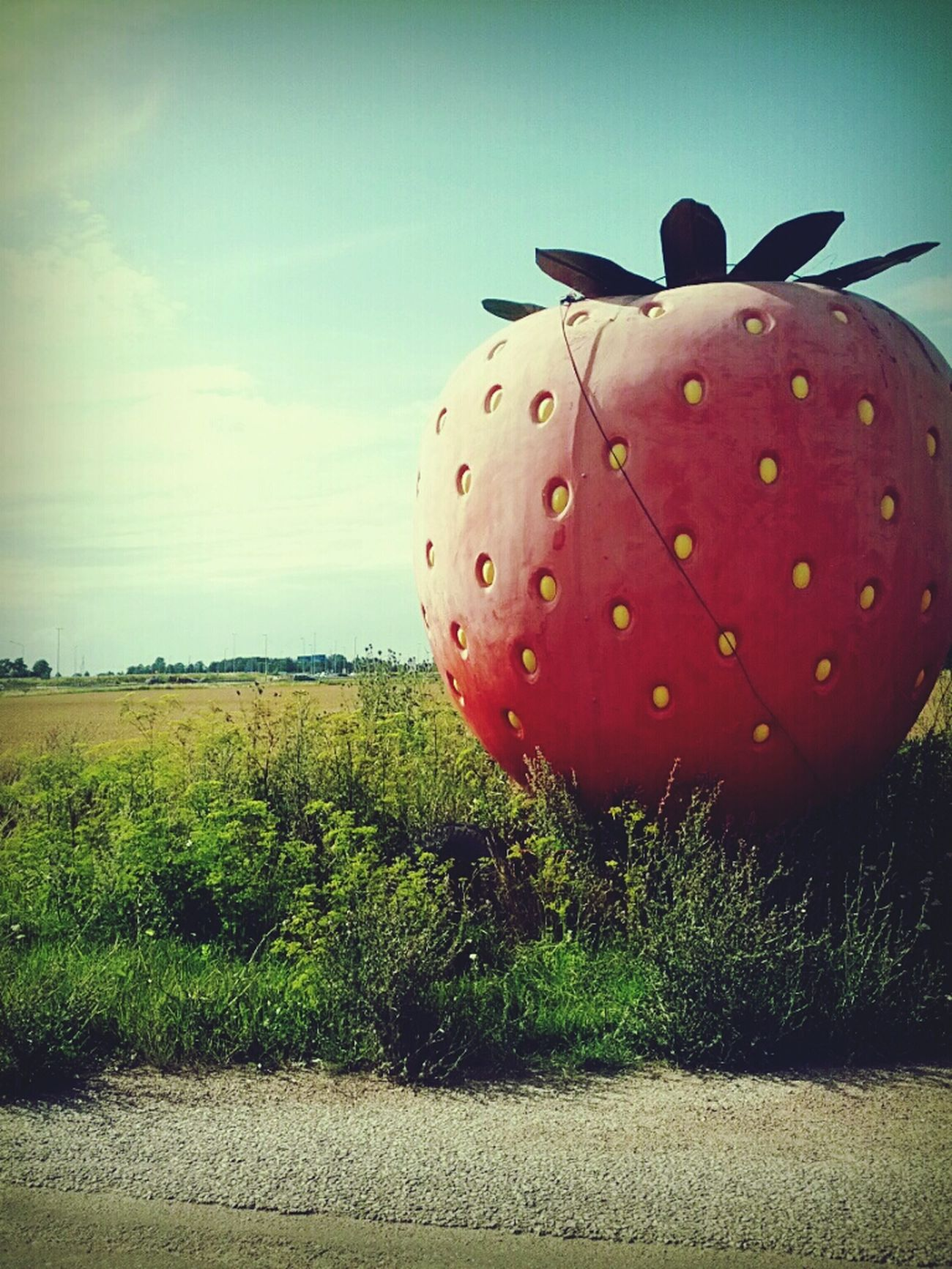 Strawberry XL Photography Landscapes Fruit