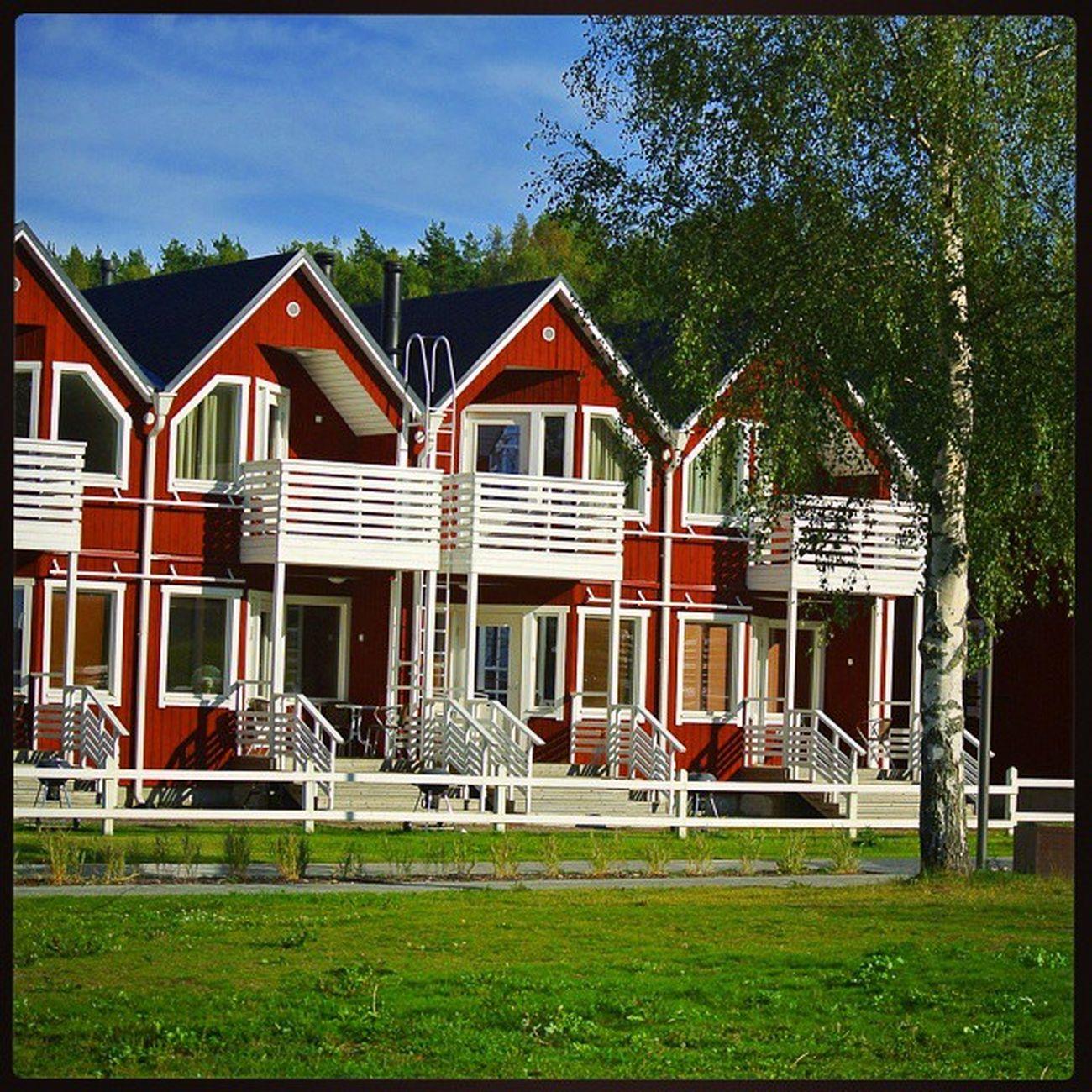Finland House Tree Rauha Suomi дом дерево Рауха Финляндия