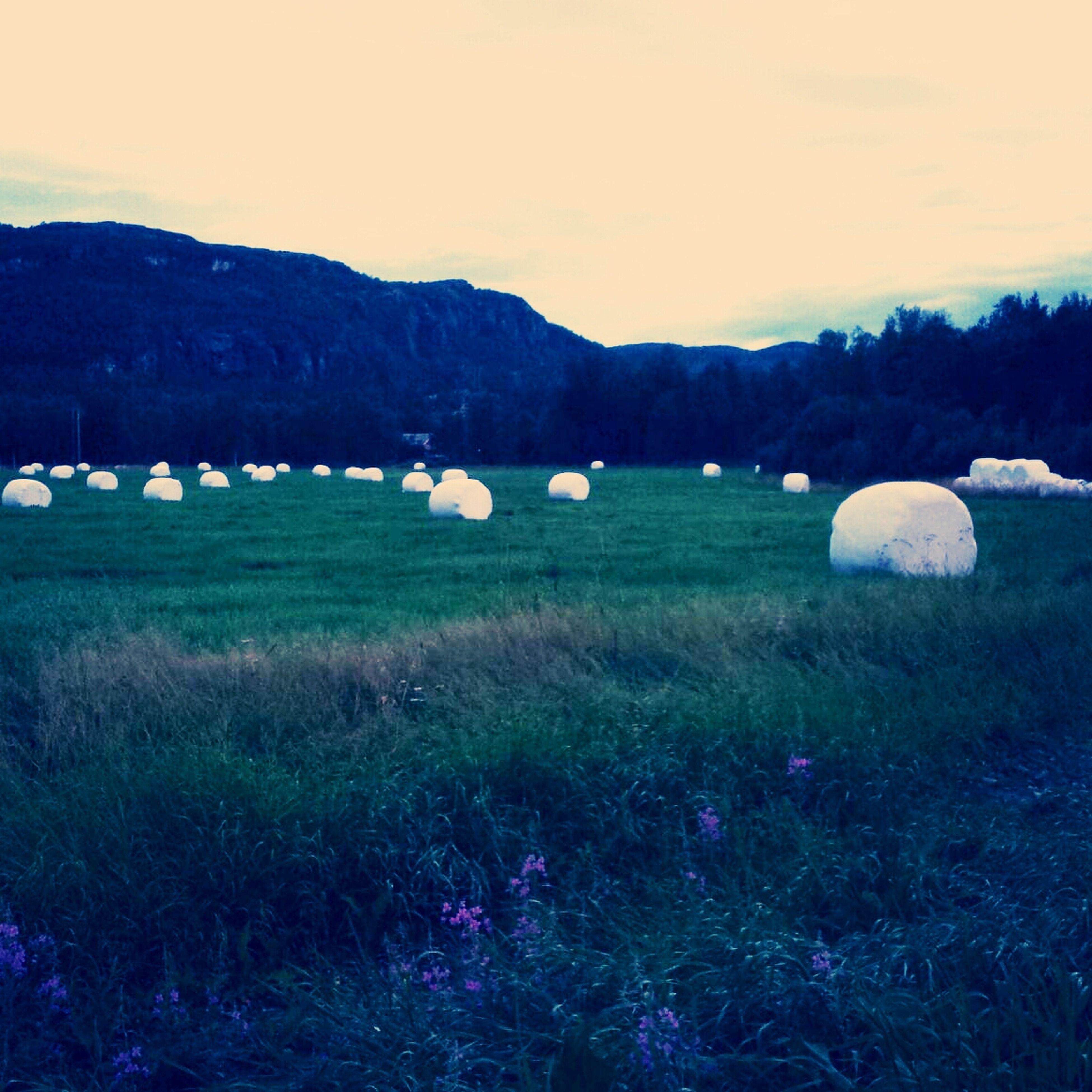 Sagslotten Natue Norway Alta