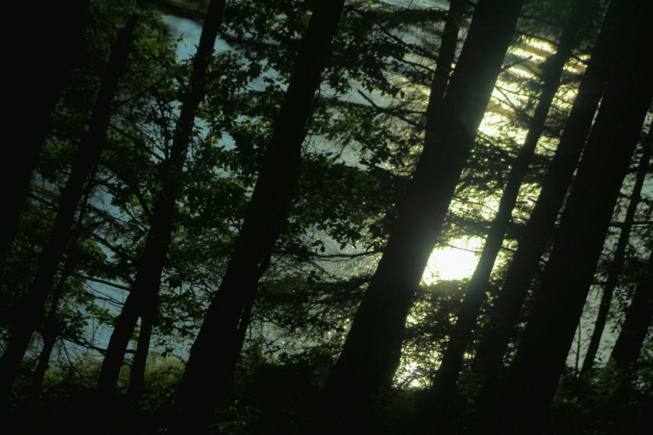 First Sunrays Forest Magical Trees Shadows And Shades Nature Check This Out Relaxing Early Morning Enjoying Life Taking Photos