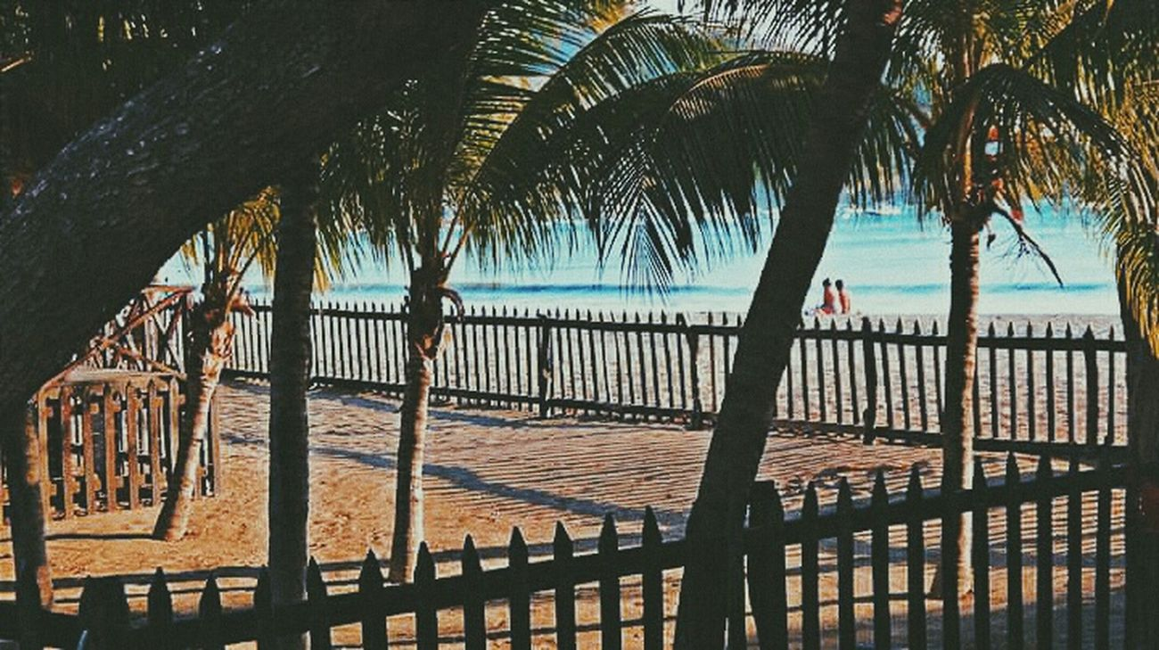 Beach Beach Photography Palms Coconut Tree San Juan Del Sur , Nicaragua Nicaragua