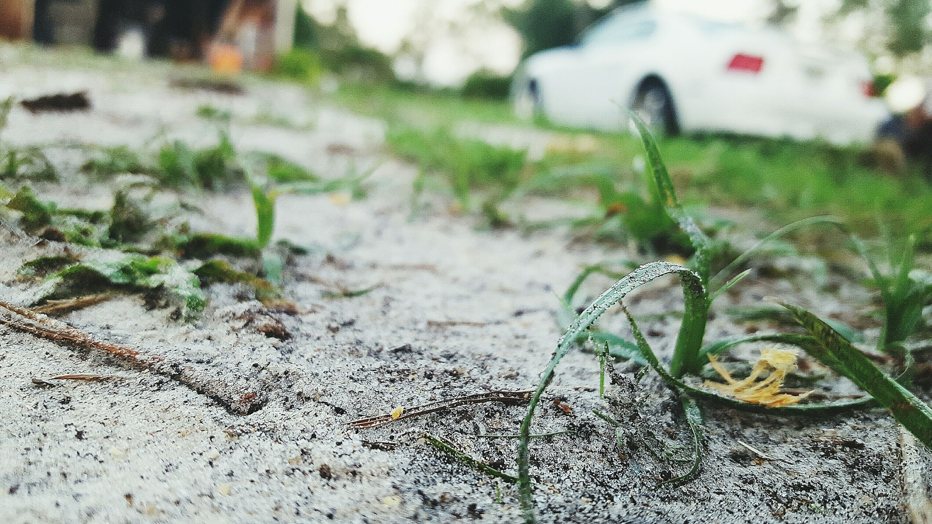 plant, growth, focus on foreground, selective focus, day, nature, outdoors, green color, no people, surface level