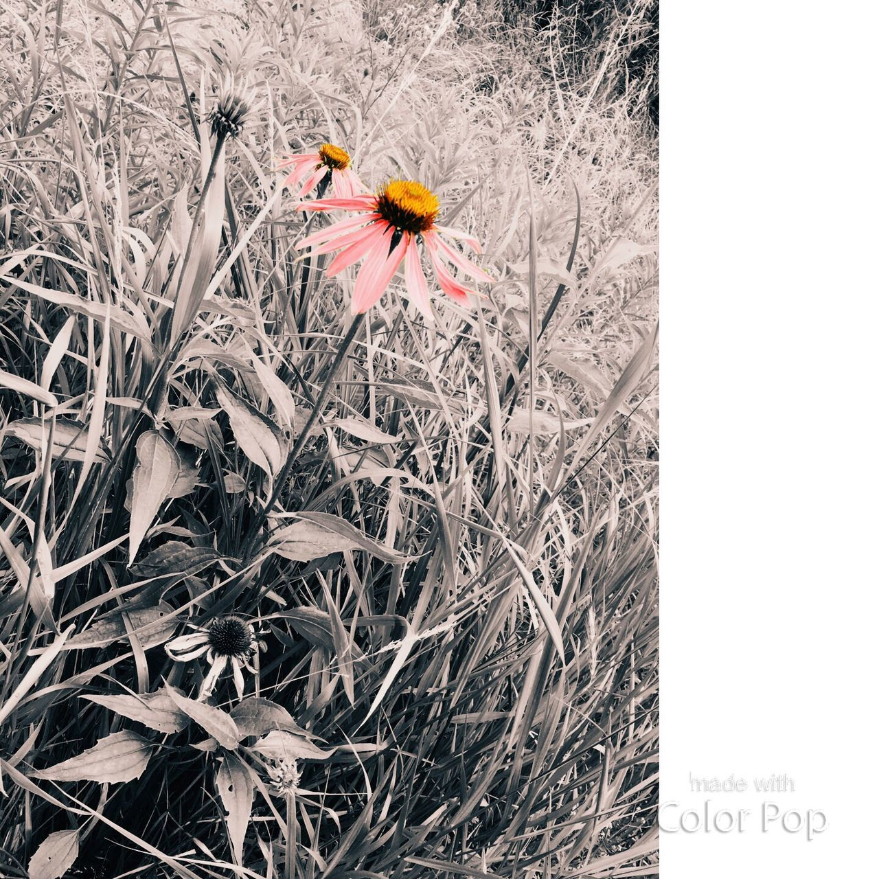 flower, fragility, nature, petal, growth, flower head, no people, plant, day, freshness, close-up, outdoors, beauty in nature, animal themes, animals in the wild, grass, blooming, bird