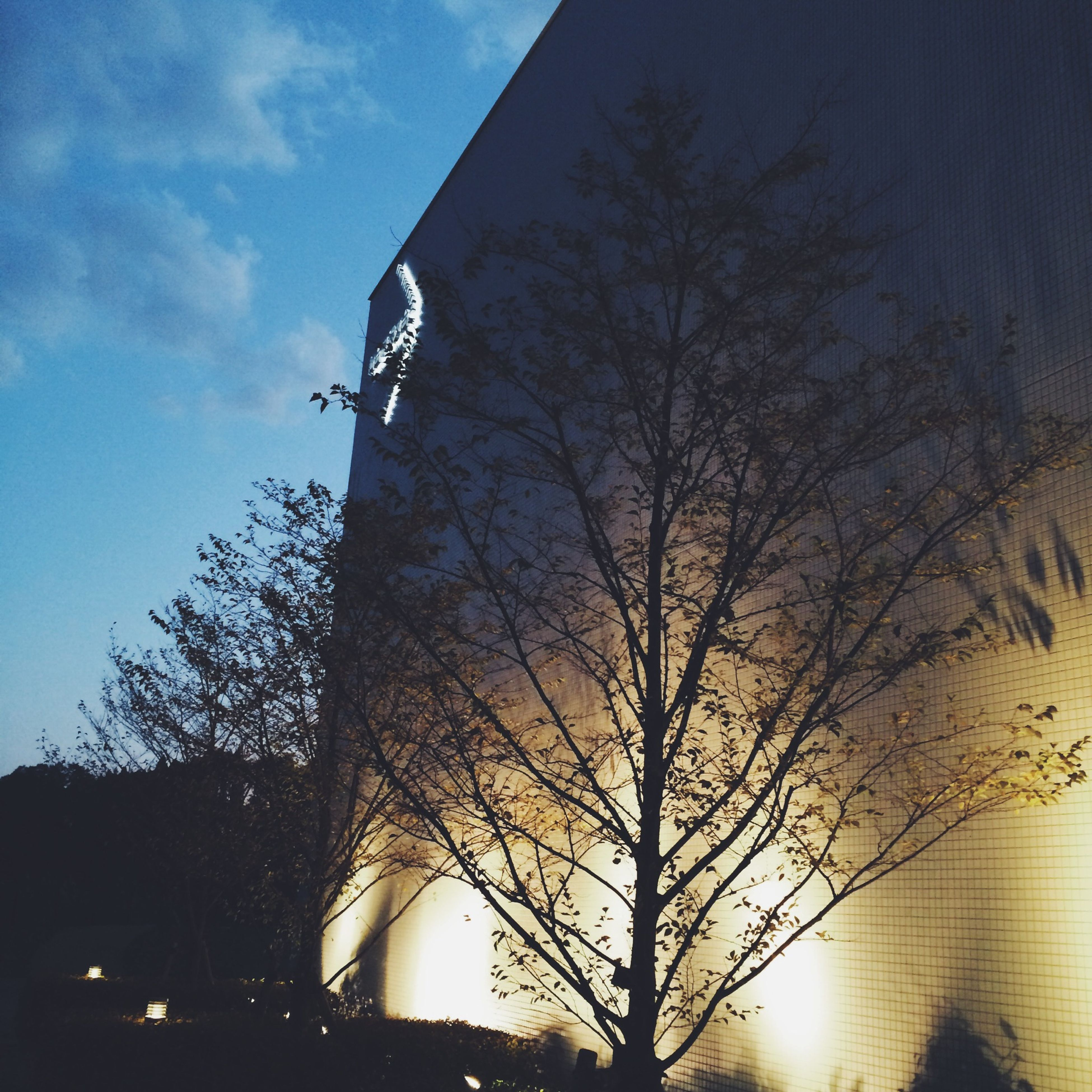 silhouette, tree, low angle view, sunset, sky, bare tree, sun, branch, built structure, architecture, building exterior, sunlight, dusk, nature, cloud - sky, outdoors, sunbeam, no people, back lit, street light