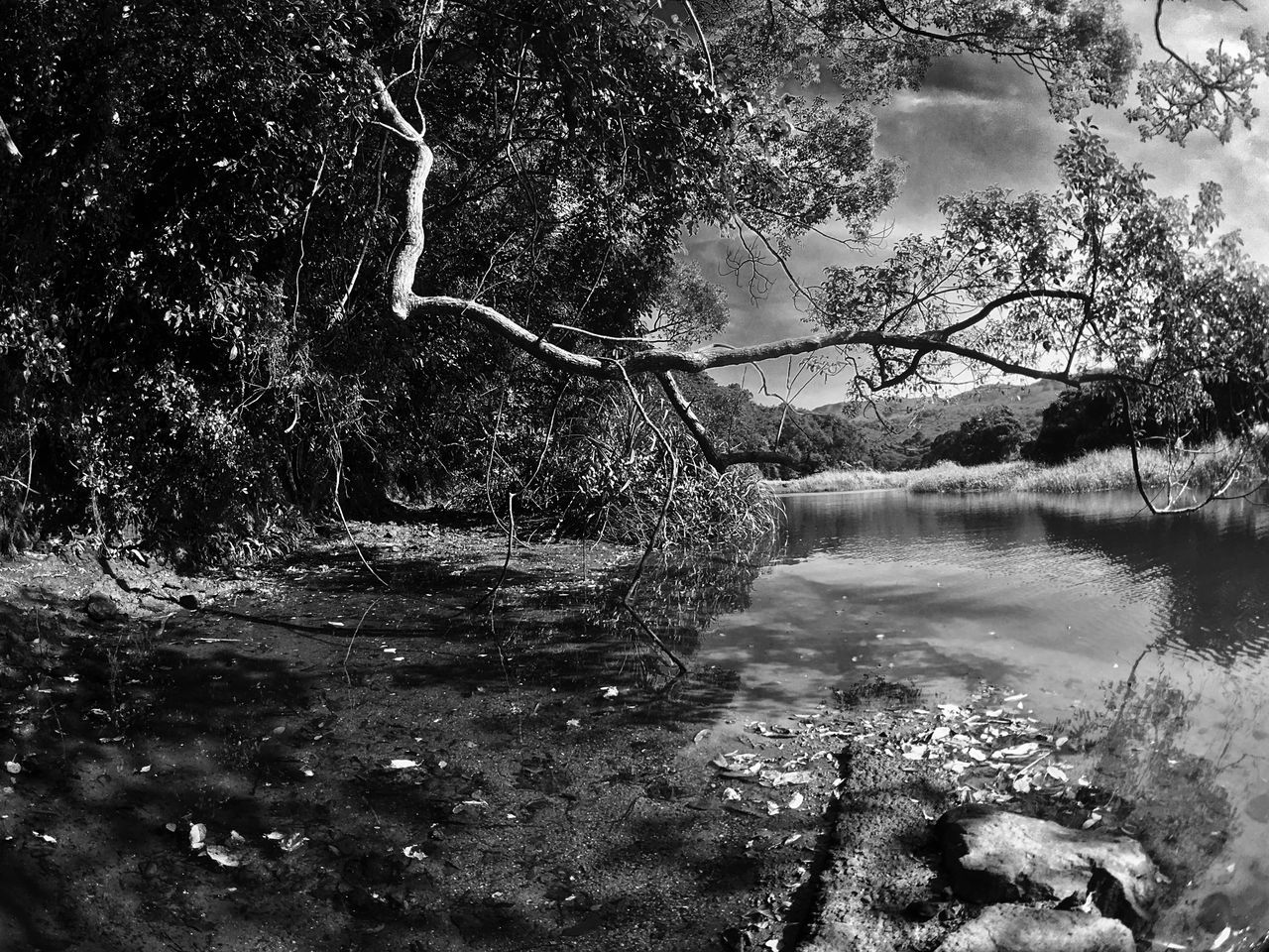 Tree Water Nature Tranquility Beauty In Nature Scenics Reflection Tranquil Scene Outdoors Day Branch Black & White Black And White Light And Shadow Sun Light Through Trees IPhoneography Moment Lens Superfish Landscapes Sunlight And Shadow Growth Non-urban Scene Stream - Flowing Water Tree Trunk Sky
