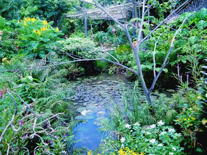 Hidden Paradise Green Beauty Eureka