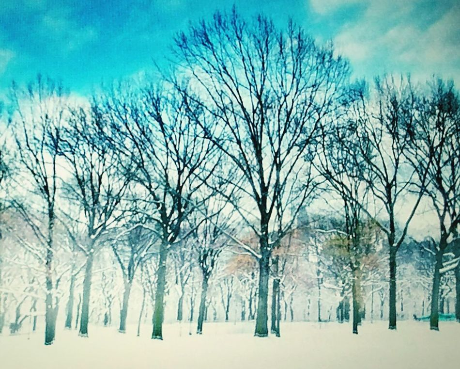 Tree Nature Sky Snow Bare Tree No People Winter Branch Outdoors Tranquility Beauty In Nature Cold Temperature Tranquil Scene Day Landscape fFirst Eyeem PhotobBackgroundsbeautiful Vintage Photo winter Classic Elegance