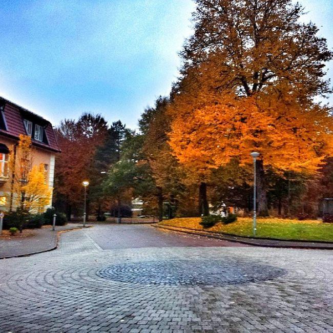 H östmorgon Spenshult H öst Autumn internationalpictures hejhalmstad 7dagarbilden