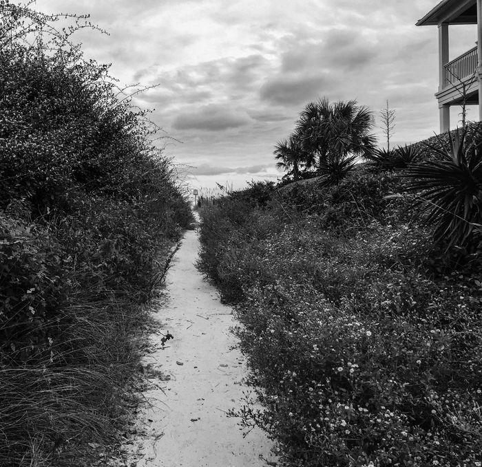 Walkway to paradise. Beach Walkway Coast Ocean View