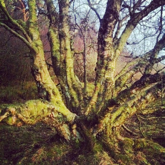 #beautifulbritain #northyorkshire #thirsk #suttonbank #trees# Trees Suttonbank Northyorkshire Thirsk Beautifulbritain