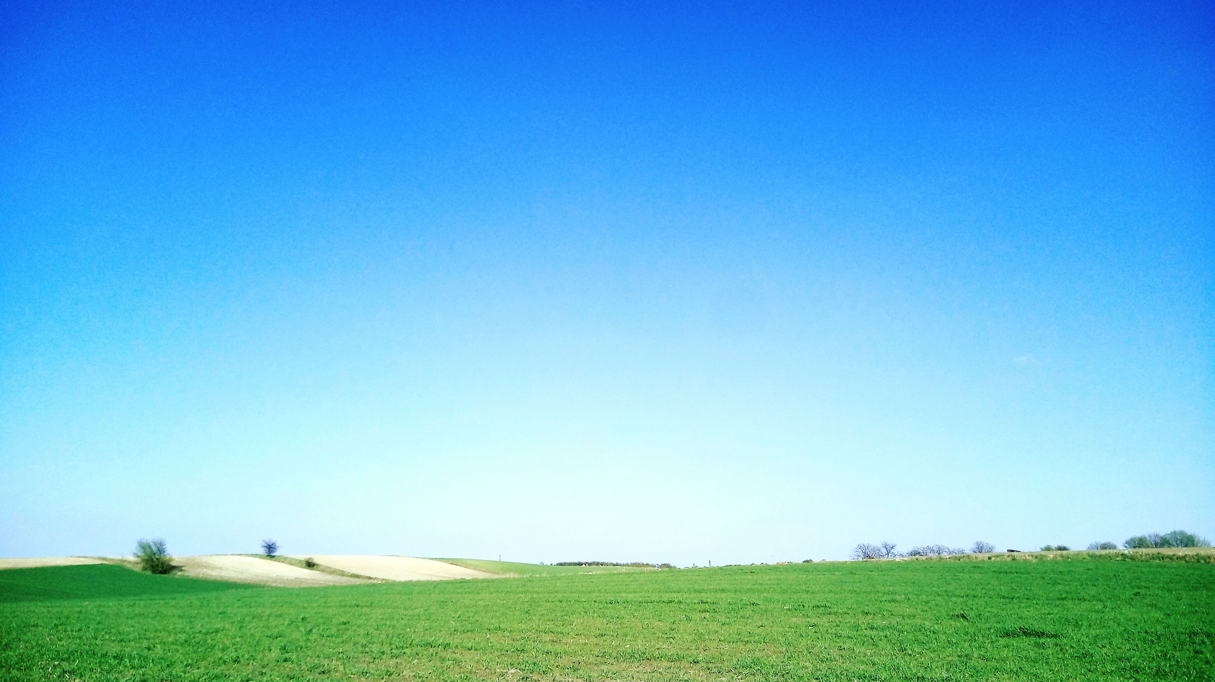 blue, clear sky, grass, sky, field, nature, tranquil scene, tranquility, outdoors, day, landscape, beauty in nature, scenics, people, mammal
