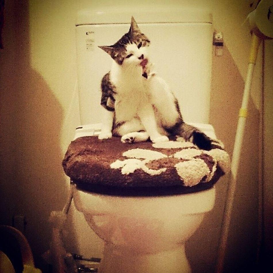 トイレの女王様