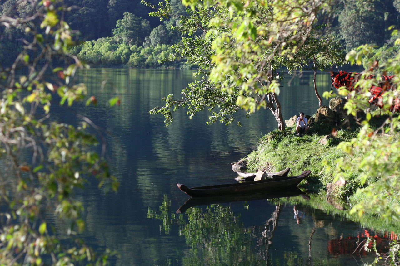 water, lake, nature, growth, tree, day, reflection, outdoors, no people, plant, animals in the wild, beauty in nature, animal themes, bird