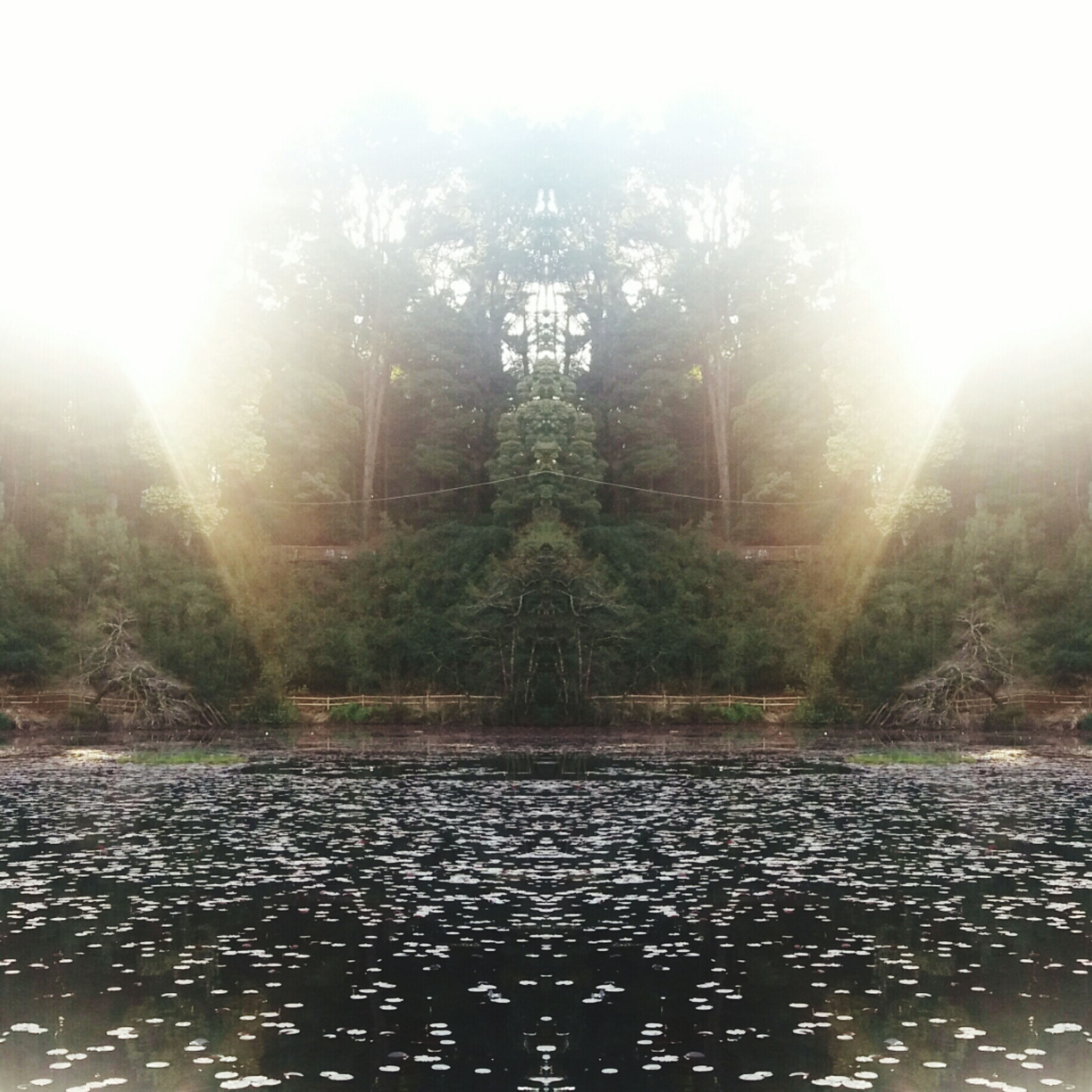 sunbeam, water, tree, lens flare, tranquil scene, tranquility, waterfront, sun, sunlight, spirituality, scenics, lake, nature, beauty in nature, bright, day, lush foliage, garden, place of worship, majestic, sunrays, back lit