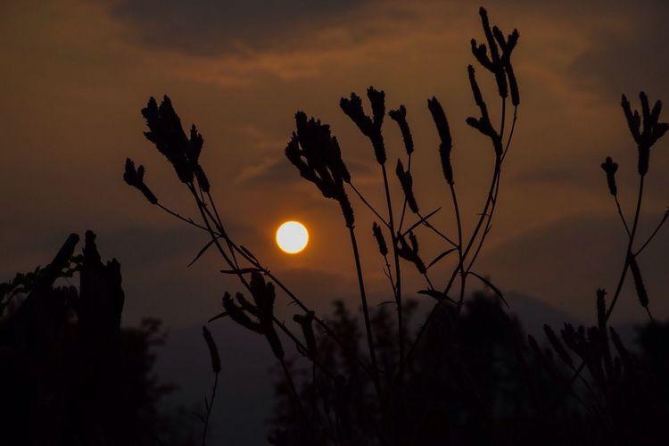 พระอาทิตย์กำลังตก