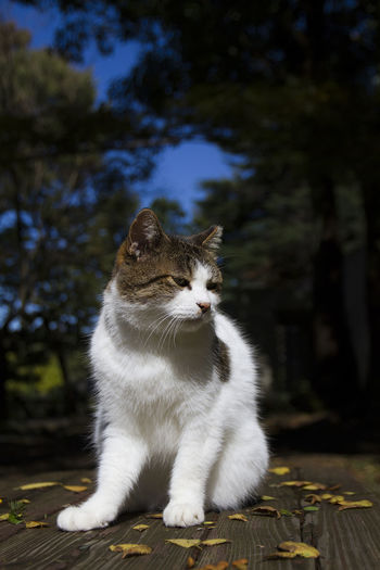 Animal Themes Cat Close-up Day Domestic Animals Domestic Cat Feline Focus On Foreground Mammal No People One Animal Outdoors Pets Sitting Tree Whisker
