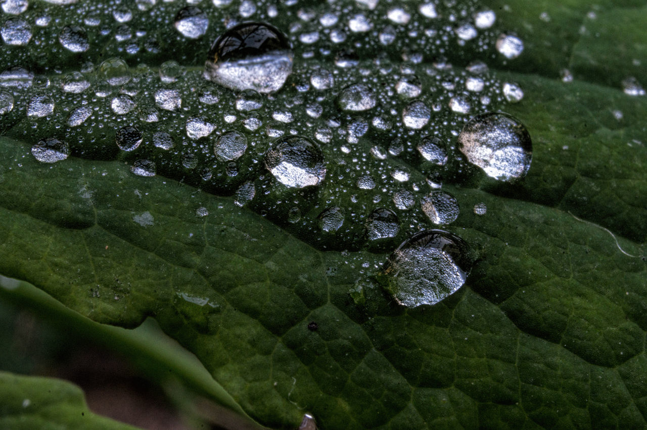 Close-up Drops Of Water Foliage, Vegetation, Plants, Green, Leaves, Leafage, Undergrowth, Underbrush, Plant Life, Flora Freshness Leaf Macro Nature Nature No People
