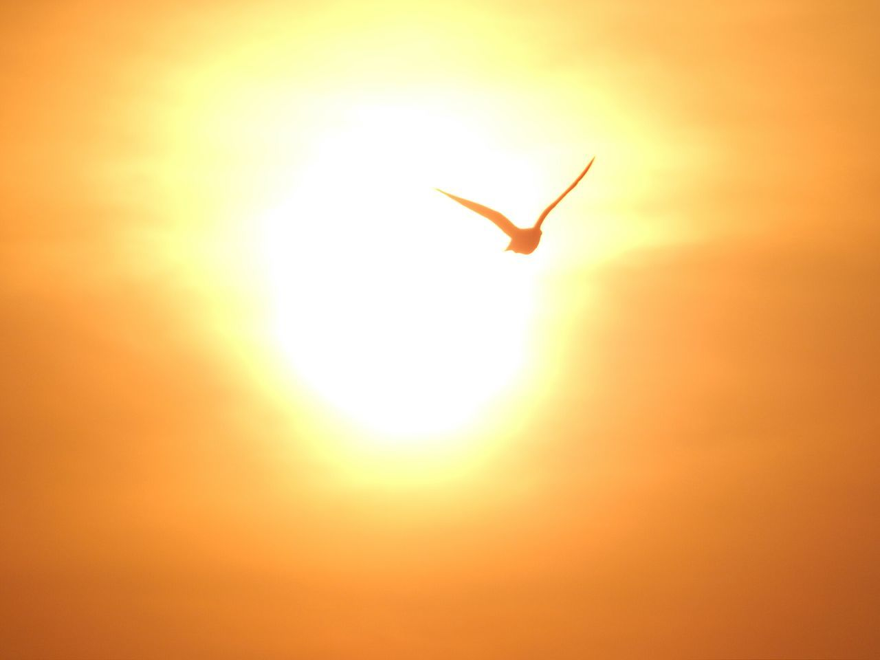 One Animal Animals In The Wild Animal Themes Flying Sun Full Length Sunset Animal Body Part Insect Hummingbird Close-up Animal Wildlife No People Nature Outdoors Day Adapted To The City