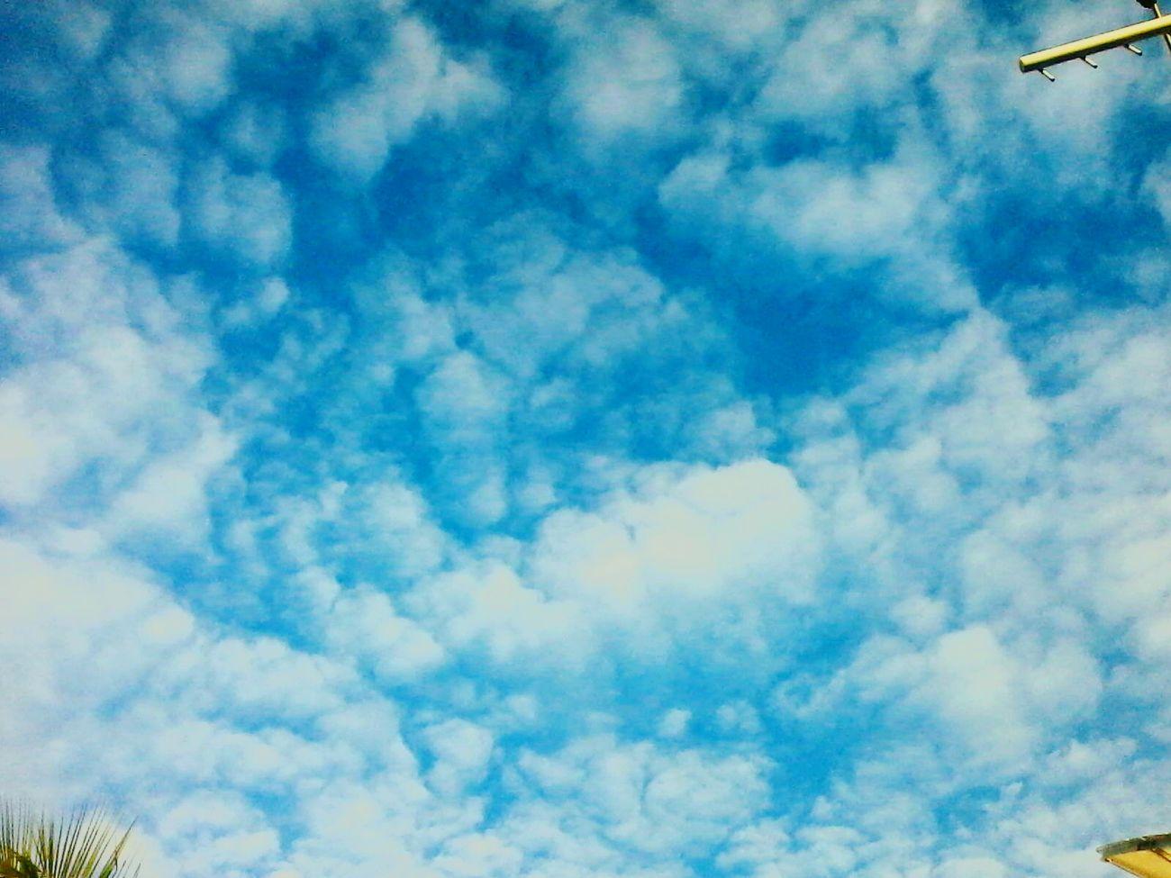 Sky ♡ Sky Collection Ceudays Ceu Liindo! Skyline CeuAzul Sky And Trees Skyscrapers Ceumaravilhoso CeuPerfeito Skylovers